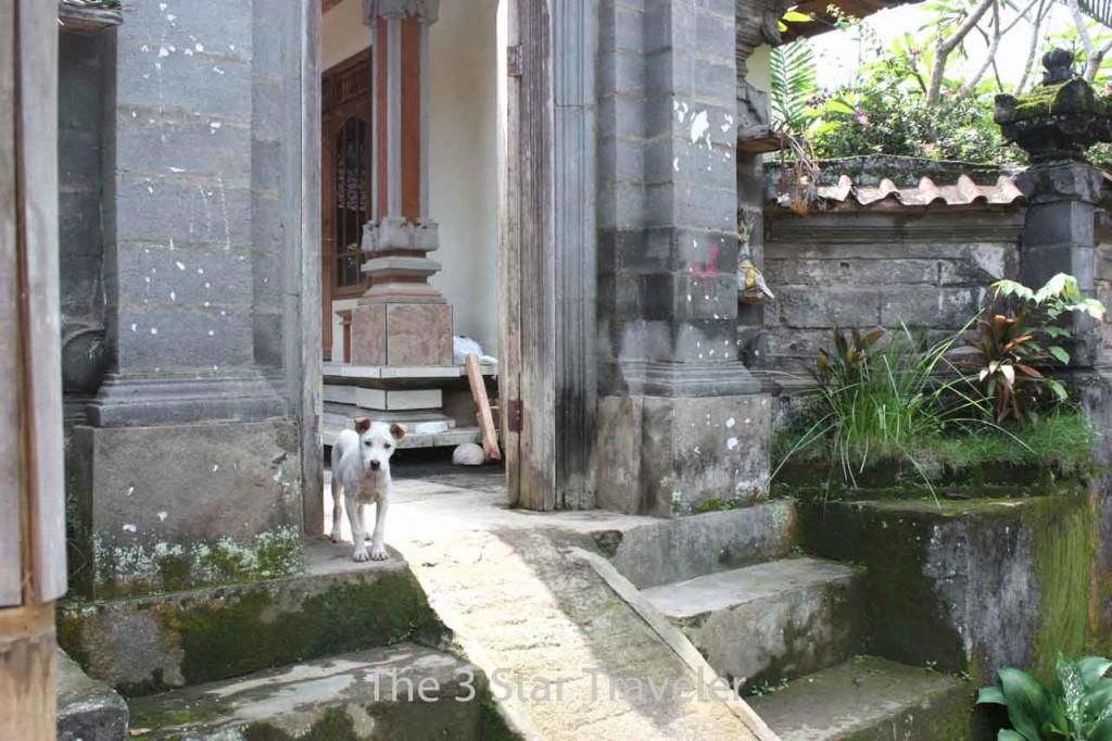 Ubud, Bali Indonesia   The 3 Star Traveler