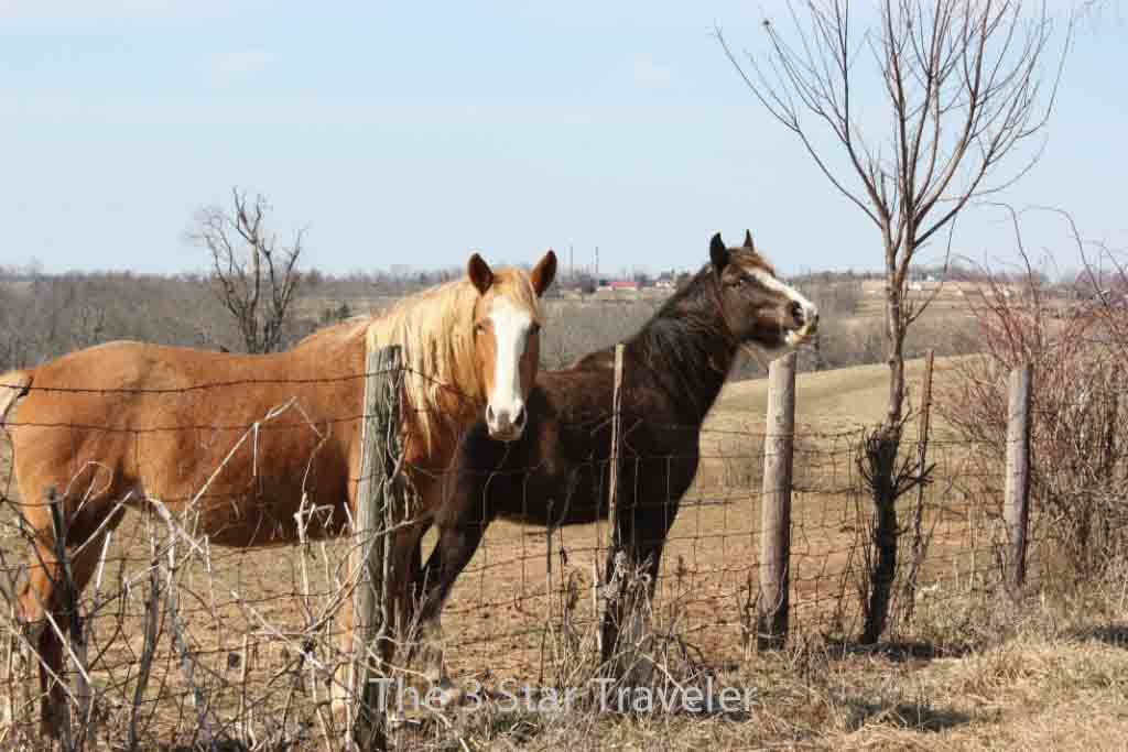 Rescue Horses in Rural Kentucky   The 3 Star Traveler