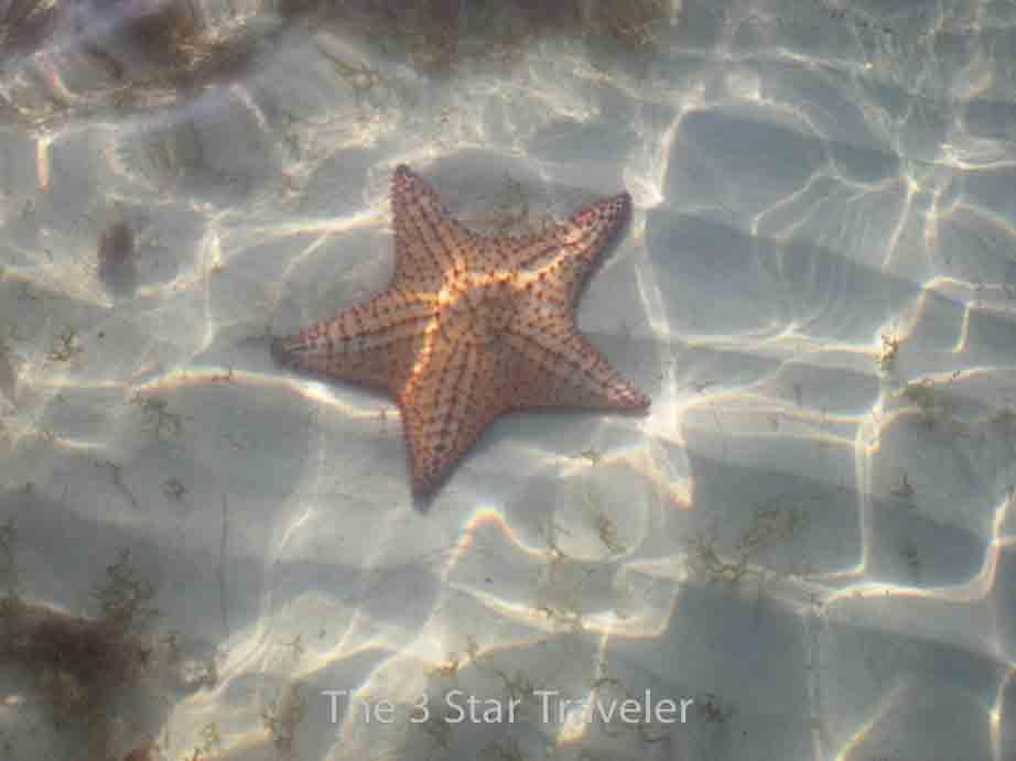 Starfish - Jamaica   The 3 Star Traveler