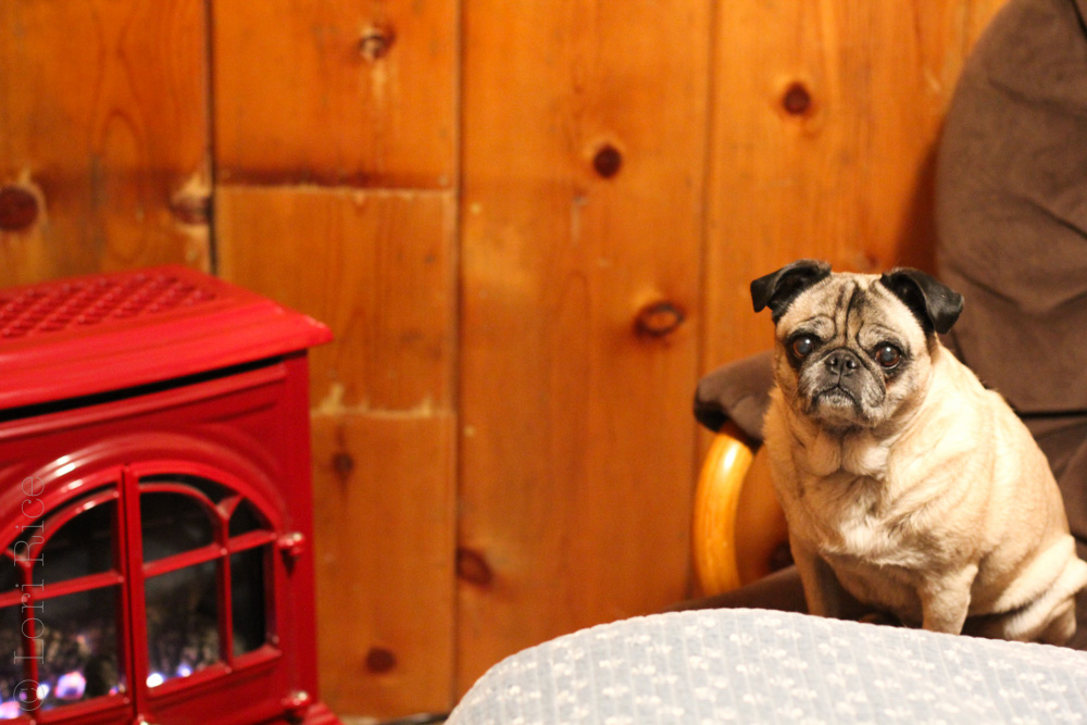 Sorensen's Resort | Dog Friendly Lodging Near Lake Tahoe | The 3 Star Traveler