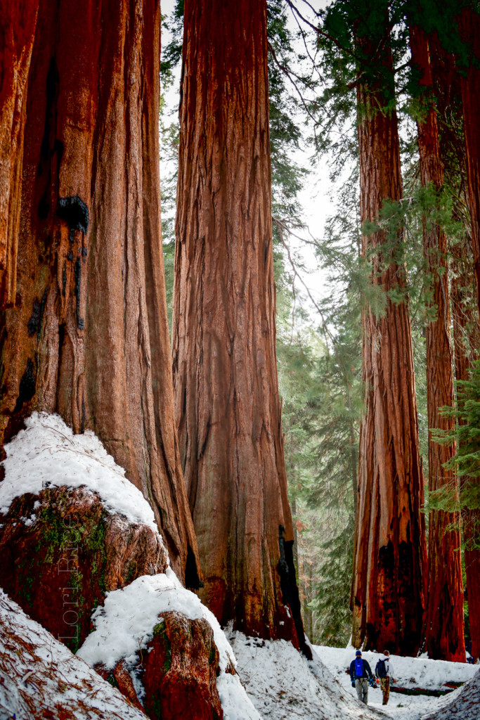 The House in Sequoia National Park | The 3 Star Traveler
