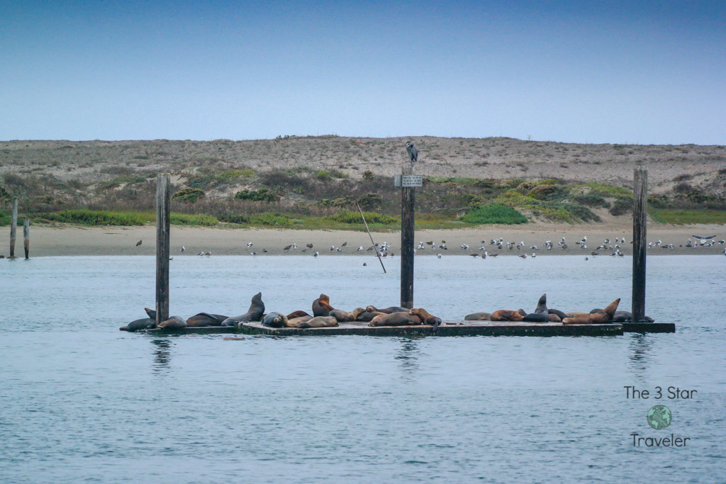 Sea Lions in Morro Bay | The 3 Star Traveler