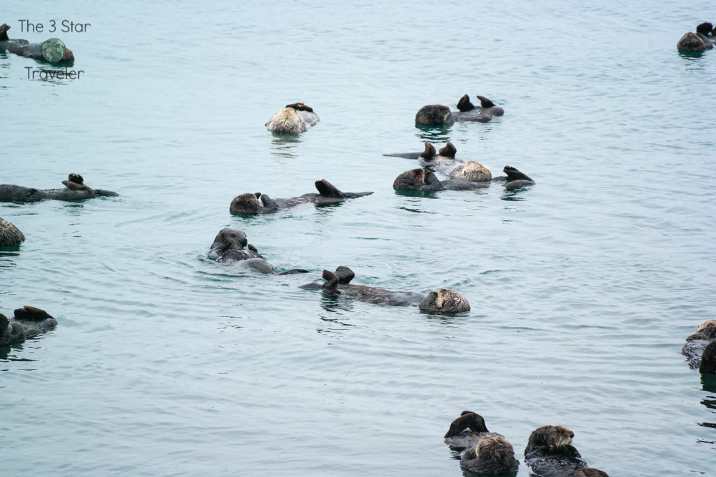 Don't miss the sea otters in Morro Bay! | California Travel | The 3 Star Traveler