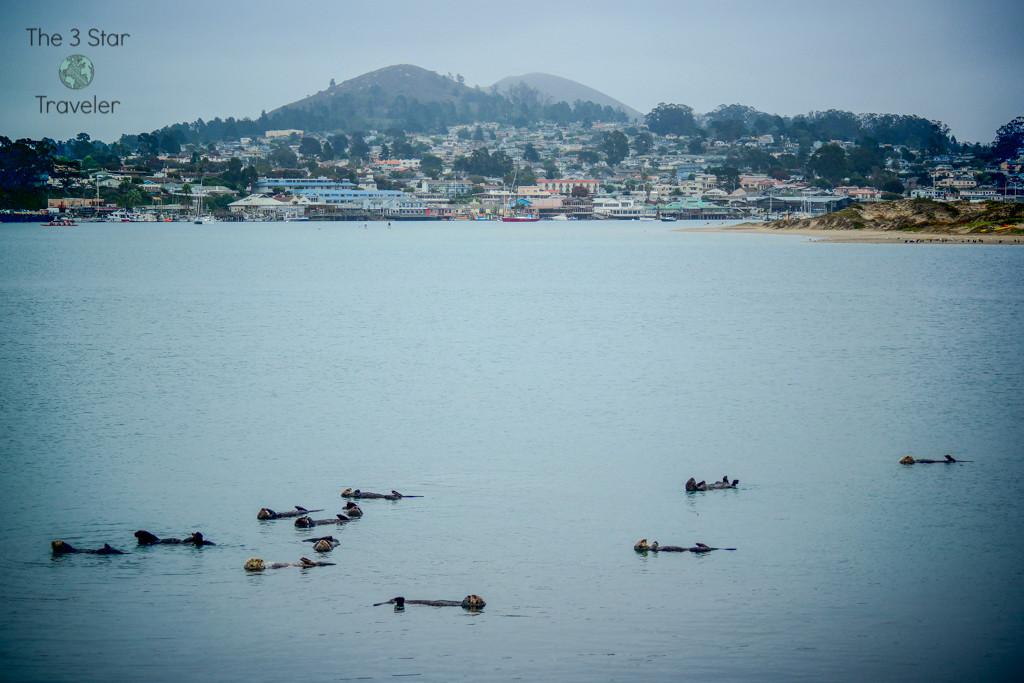Sea Otters in Morro Bay, California | The 3 Star Traveler