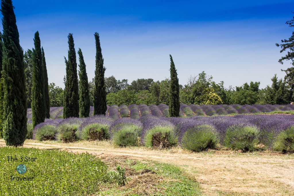 The Lavender Ranch | Chico Road Trip | The 3 Star Traveler