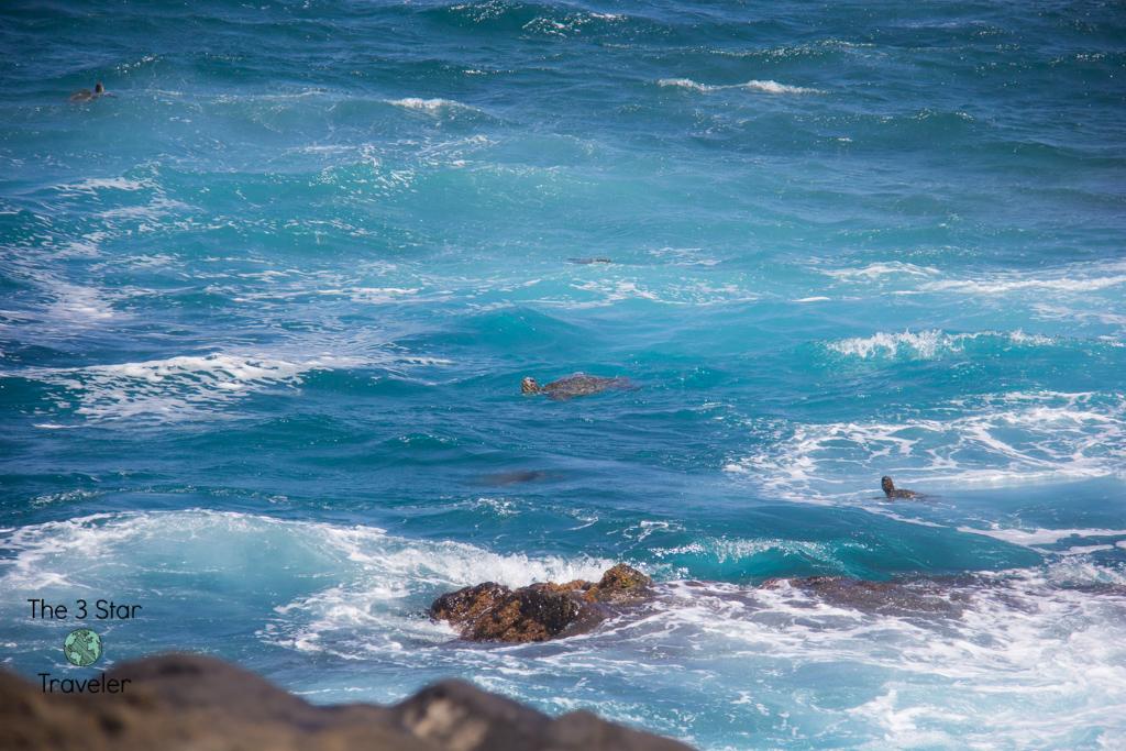Sea Turtles at Queen's Bath Kauai