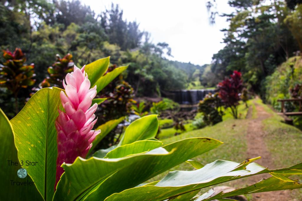 Stone Dam | 5 Ways to Stay Active in Kauai | The 3 Star Traveler