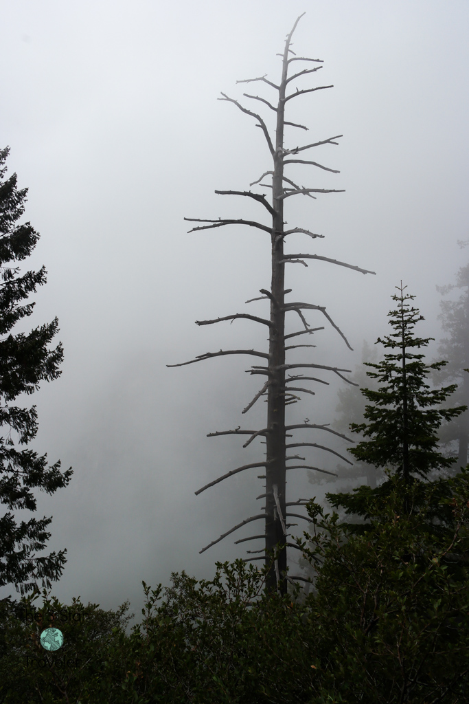 Foggy view from Four Mile Trail, Yosemite
